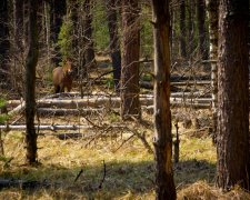 Чорнобильський ліс