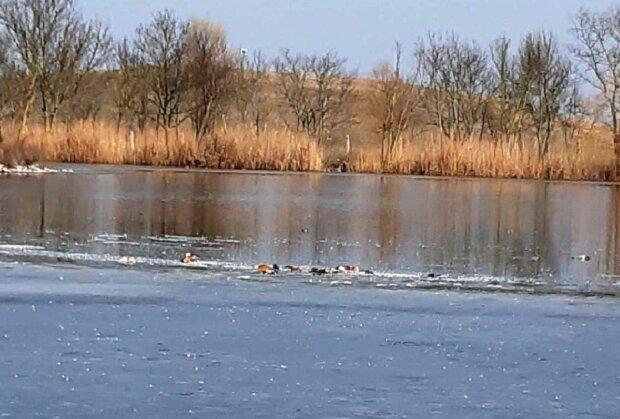 "В заповеднике ""Аскания-Нова"" нашли погибших птиц, фото: kherson-news"