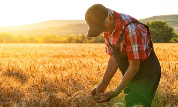 """Украина установила странный рекорд: показатели ухудшились, но аграрии ушли """"в плюс"""""""