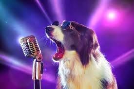 Пес випадково наспівав відому пісню Брітні Спірс. Вийшло не гірше оригіналу!