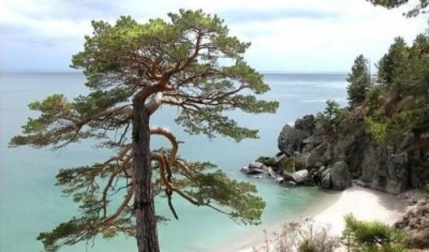 Учені знайшли найстаріше дерево Європи