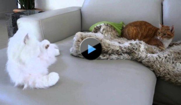 Как котов роботом пугали