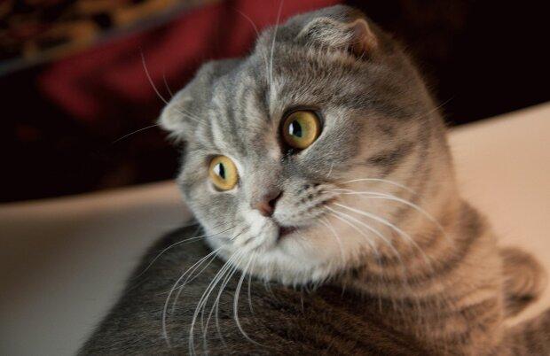 Кіт вирішив прийняти ванну з пінною і став зіркою інтернету: епічне відео