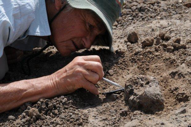Найден уникальный образец кожи древней рептилии: ученые несказанно счастливы