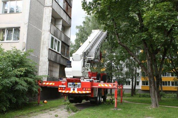 Ночував на дереві: під Дніпром малюк застряг на 10-метровій висоті, рятували всім містом