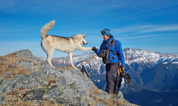 Пес-альпинист покорил недосягаемую вершину: теперь у мохнатого профи миллионы фанатов