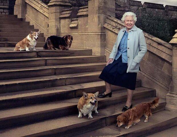 Собаки британской королевы, фото:GLOBALLOOKPRESS.COM