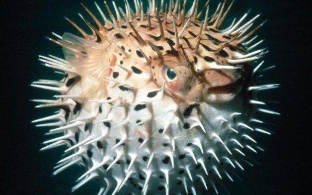 Человеческие черты рыб поразили ученых