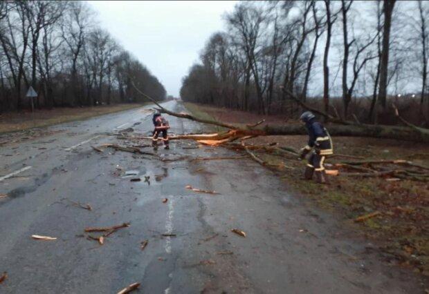 Повалені дерева і затоплені дороги - штормовий вітер і злива наробили лиха в Україні