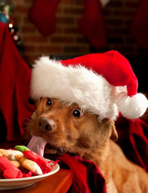 Анекдоти на 26 грудня змусять вас забути про передноворічні клопоти