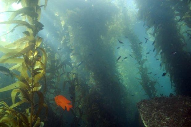 Монстр из глубины озера шокировал рыбаков: агрессивная черепахо-змея