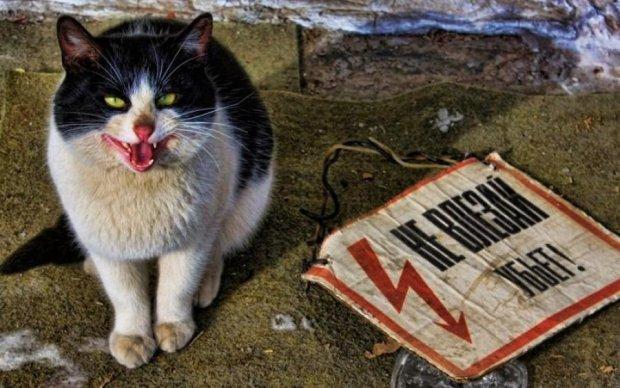 Суворий київський кіт провчив квартирного злодія