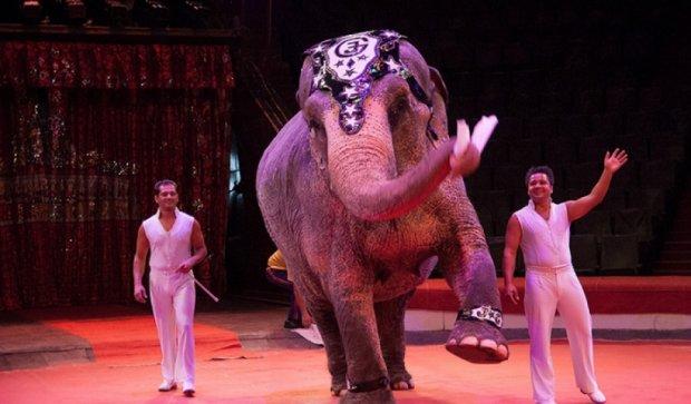 В Германии слониха сбежала из цирка и ранила мужчину