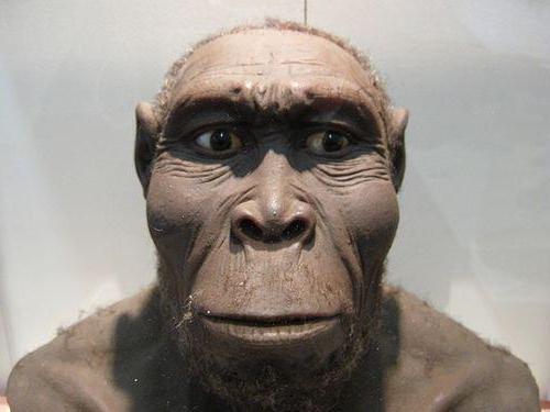 Дарвин ошибался: раскрыли истинную причину появления человека на Земле, исследование впечатляет