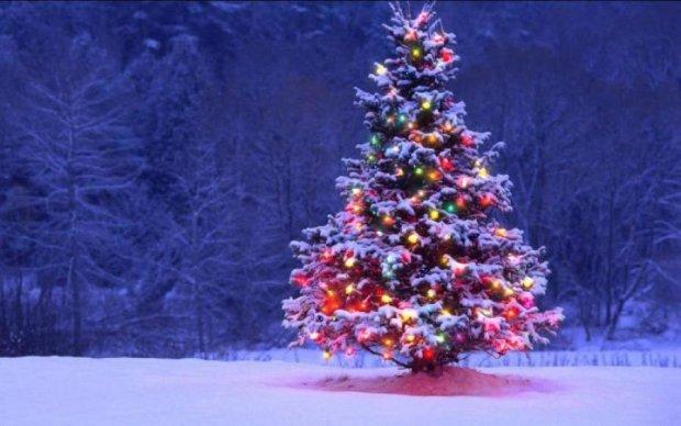 Пять интересных фактов о новогодней елке