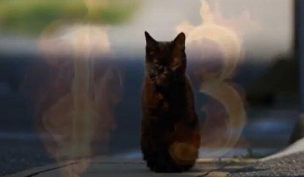 П'ятниця 13-те, фото: кадр з відео
