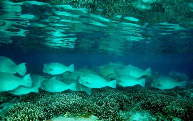 Слишком любвиобильные рыбы устроили в море оргию