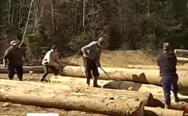 вырубка лесов, скрин с видео