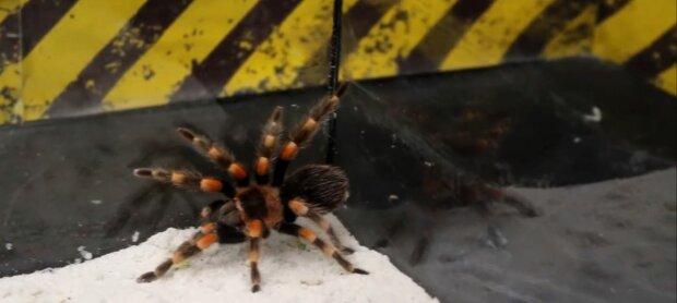 В Запорожье засекли ядовитого паука, укусил - и доволен