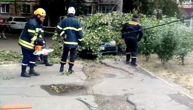 Упало дерево, скриншот из видео