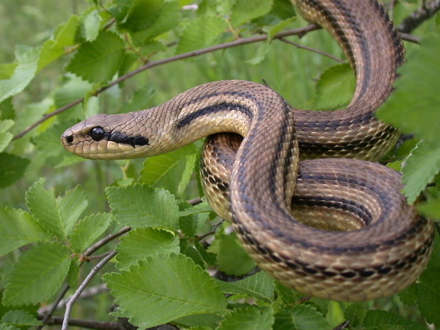 """На Тернопольщине """"повелительница змей"""" держала в ужасе соседей: сползались десятками"""