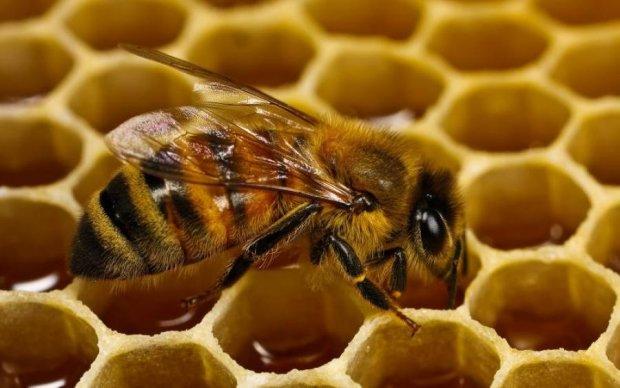 Клещи открыли охоту на пчел
