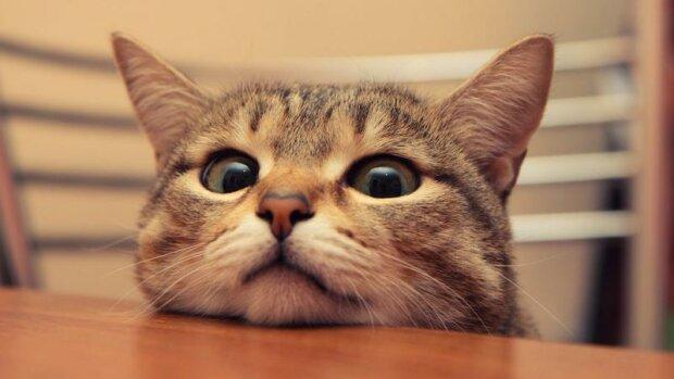 Котика клонували