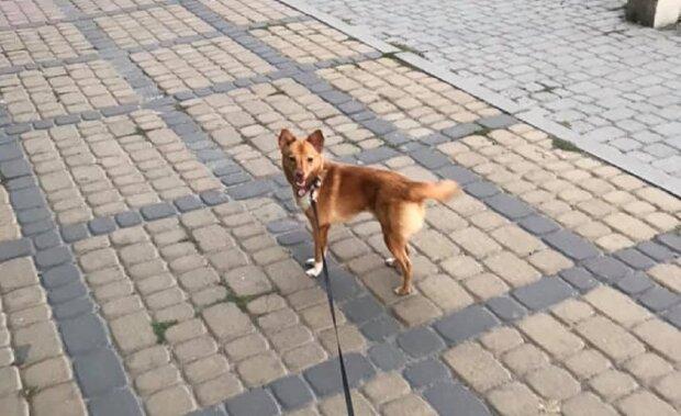 Во Франковске отравили собаку, фото: Facebook Ирина Билитюк