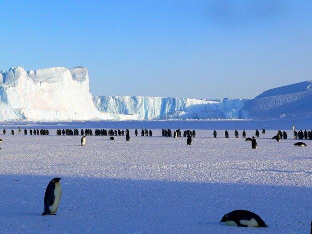 Антарктида, фото Pxhere