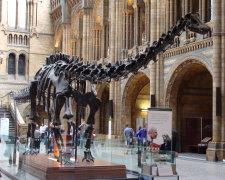 Кістяк динозавра