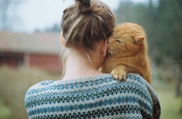 Котик, фото из открытых источников