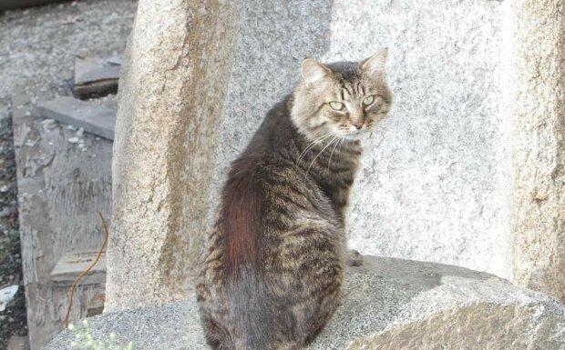 """У Дніпрі зник кіт Семен, миші пустилися в танок: головного """"музейника"""" шукають усім містом"""