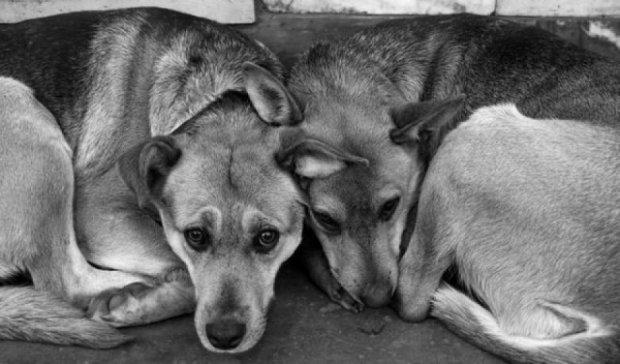 В Херсонском приюте неизвестные жестоко потравили собак