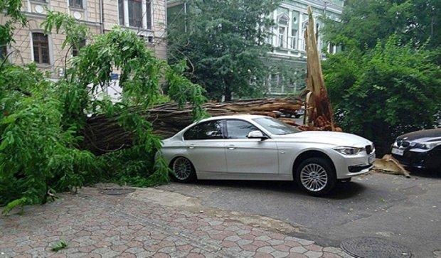У Одесі через буревій падають дерева і плавають машини (фото, відео)