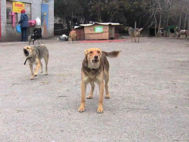 У Запоріжжі зграя собак напала на дитину, ледь не загризли: городяни не можуть оговтатись від побаченого