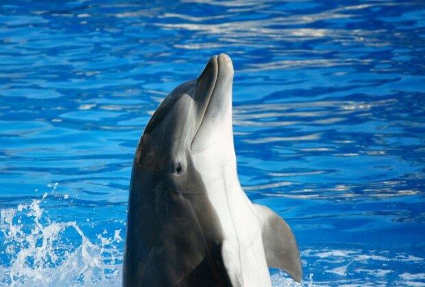 дельфин, фото: Pxhere