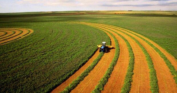 Купить землю в Украине станет проще: у Зеленского объяснили, как получить заветный клочок чернозема