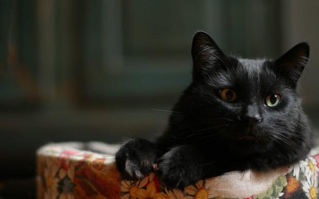 """""""В тот момент я подумала, что потеряю ее"""": мать не знала, почему кричит кошка из спальни ее дочери, то что случилось дальше трогает до слез"""