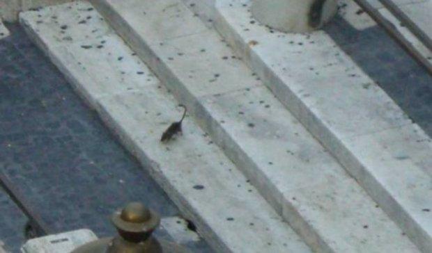 У Римському фонтані Треві граються щурі