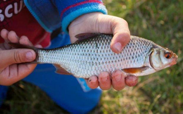 Ботулизм вернется? Смертельная рыба попадает на украинские прилавки