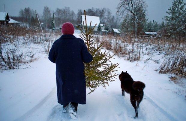 Як правильно прибирати новорічну ялинку: головні традиції та народні прикмети