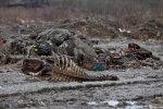 Київські забудовники отруїли Дніпро, місто на межі непоправної катастрофи