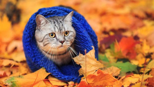Погода на 3 ноября: синоптик посоветовала пока не заползать в норы