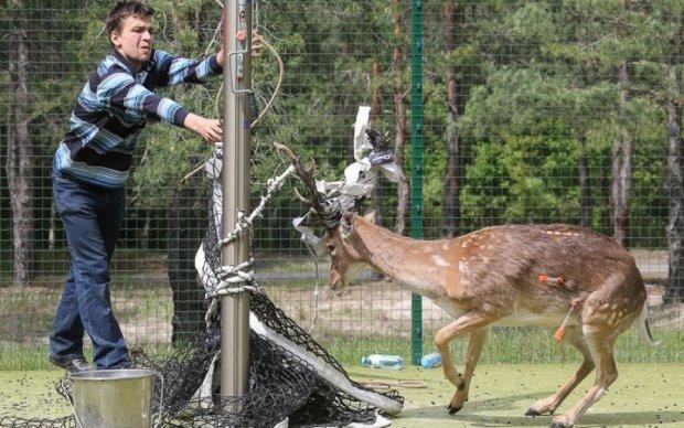 Порятунок рядового Тузика: як працює МНС для тварин