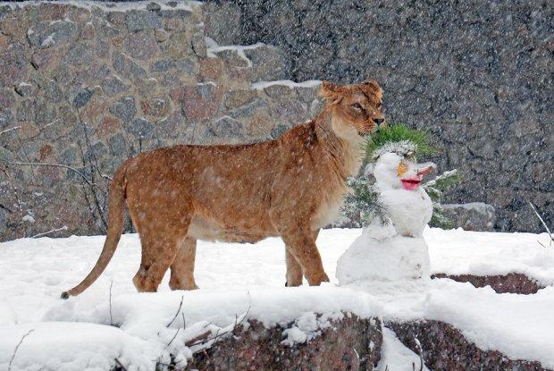 Київський зоопарк показав реакцію тварин на перший сніг: фото розчулять кожного
