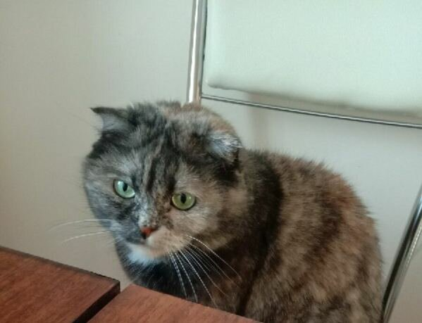 Кіт, фото: соціальні мережі