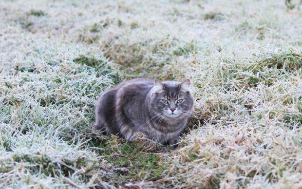 Дощі та заморозки: погода знов познущається над українцями