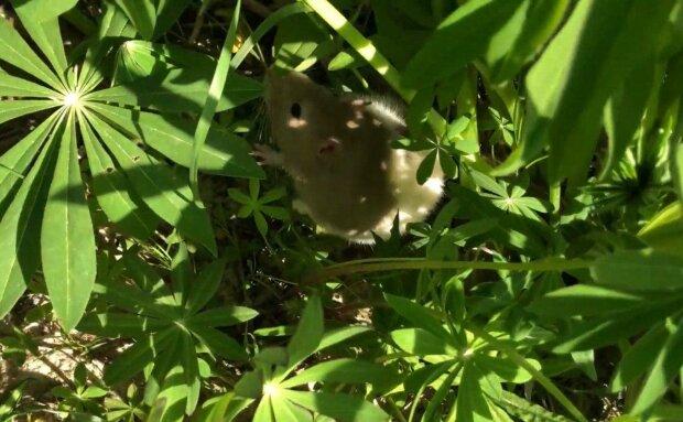 """Тернополянина від в'язниці врятували миші, які """"кайфонули"""" речовими доказами, - судді виявилися безсилі"""
