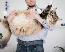 Кот, фото - Blackfaraon