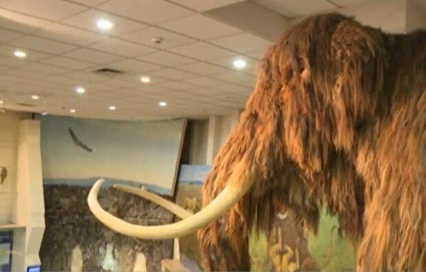 Мамонт в музее, скриншот: YouTube